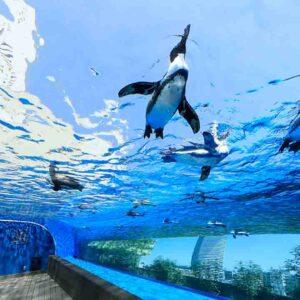 サンシャイン水族館と考えた、人とペンギンの幸せな関係性